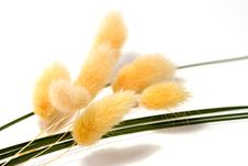 Free Bunch Of Dried Flowers Stock Image - 2384571