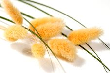 Free Bunch Of Dried Flowers Royalty Free Stock Photography - 2384577