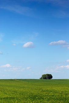 Spring Tree Stock Image