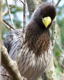 Free Crazy Bird Royalty Free Stock Photos - 2385318