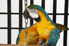 Tricky Macaw Royalty Free Stock Photography