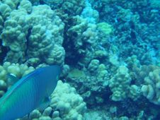 Free Tropical Fish And Coral Reef Stock Photos - 2387783