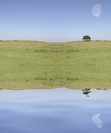 Field Landscape With Moon Royalty Free Stock Image