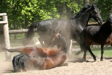 Free Horses In The Park Royalty Free Stock Photos - 2388888