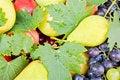 Free Fresh Organic Fruits Stock Image - 23823401