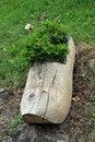 Free Clog Flower Pot Stock Photography - 23827462