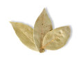 Free Three Bay Leaves Stock Photos - 23828413