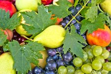 Free Fresh Organic Fruits Stock Image - 23821431
