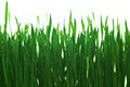 Free Water Drops On The Green Grass Royalty Free Stock Images - 23836539