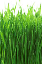 Free Water Drops On The Green Grass Stock Photos - 23836703