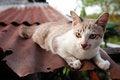 Free Cat Stock Photo - 23837070