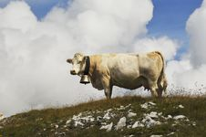 Free Alpine Cow Stock Photo - 23834210