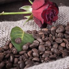 Free Red Rose On Coffee Beans Royalty Free Stock Photos - 23838428