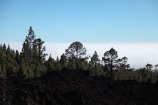 Evening Light On The Lava Fields Of The Teide Volc