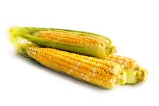 Free Corn Vegetable Stock Photography - 23844452
