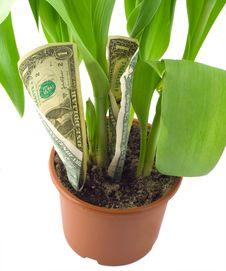 Free Dollar Grow Pot Stock Photography - 23844562