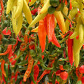 Free Hot Peppers Royalty Free Stock Photography - 23864767