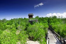 Free Mangrove Forest Stock Images - 23864464