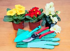 Free Gardening Tools With Flowers Royalty Free Stock Images - 23869199