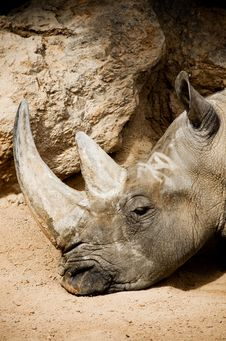 Free Rhinoceros Royalty Free Stock Photos - 23875688