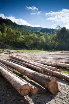 Free A Row Of Logs Lying On The Ground Royalty Free Stock Image - 23877076