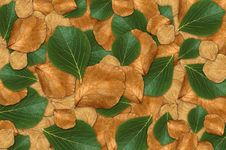 Free Green And Brown Leaf Background Stock Images - 23880644
