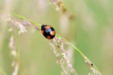 Free Ladybug Stock Photo - 23881870