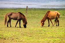 Free Horses Stock Images - 23884324