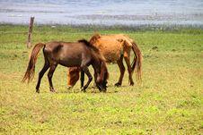 Free Horses Stock Photo - 23884360