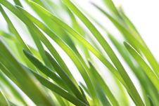 Free Green Onion Royalty Free Stock Photography - 23889707