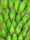 Free Green Bananas Stock Photos - 23898213