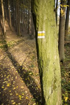 Free Yellow Sign On A Tree Stock Photography - 23894902