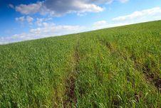 Free Wheat Field Royalty Free Stock Image - 23895236