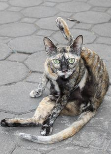 Street Cat Royalty Free Stock Images