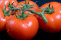 Free Vine Ripe Tomatoes Royalty Free Stock Photography - 2391677