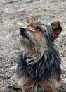 Free Very Shaggy Dog 5 Royalty Free Stock Photography - 2395117
