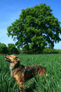 Free The Dog And The Tree Stock Image - 2397011
