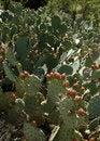 Free Desert Garden 124 Stock Photos - 2397373