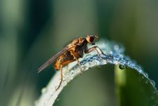 Free The Fly Stock Photos - 2390483
