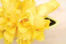 Free Yellow Tulips 12 Royalty Free Stock Photos - 2391568