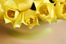 Free Yellow Tulips 15 Royalty Free Stock Image - 2391576