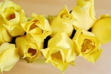 Free Yellow Tulips 14 Royalty Free Stock Photography - 2391577