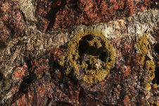 Free Mushroom Circle Royalty Free Stock Photography - 2392067