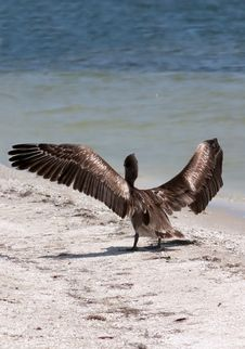 Free Spread Your Wings Stock Images - 2393214