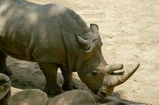 Free Rhino Royalty Free Stock Image - 2393276