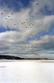 Free Birds In Flight Royalty Free Stock Photo - 2394235