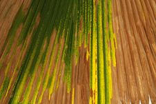 Free Coconut Tree Leafs Stock Images - 2394384