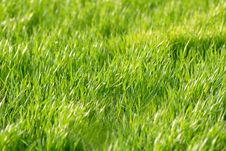 Free Green Grass Stock Photo - 2394710