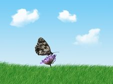 Free Butterfly Stock Photos - 2395083
