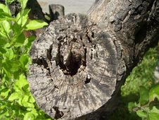 Free Tree Stump Stock Photos - 2397383
